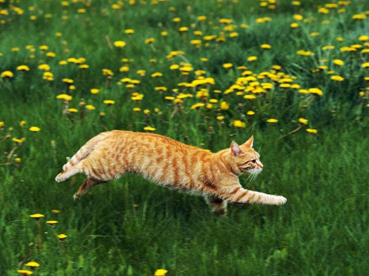 Рыжий кот бежит по зеленой траве