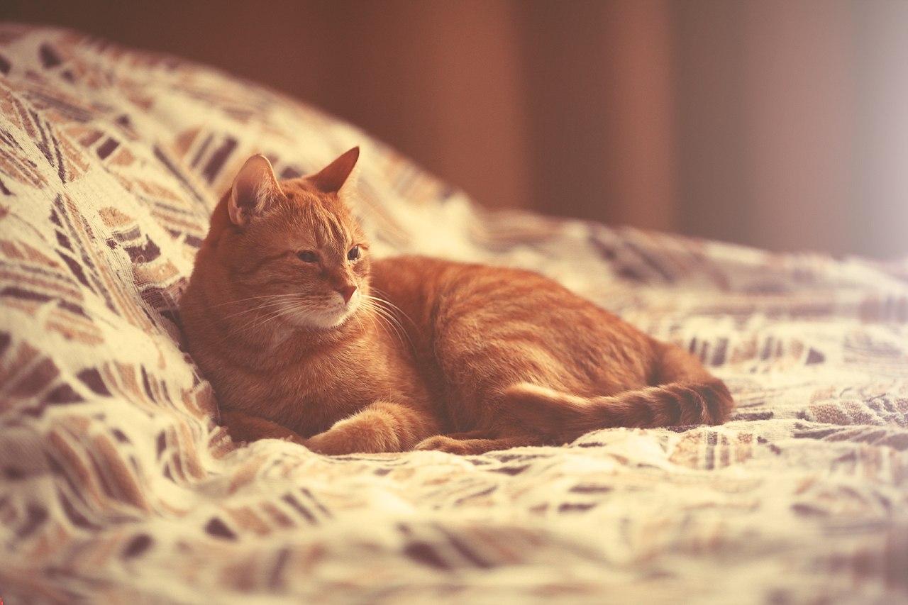 Рыжий кот лежит на кровате