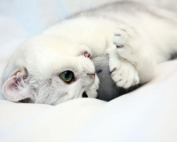 Котенок что-то грызет