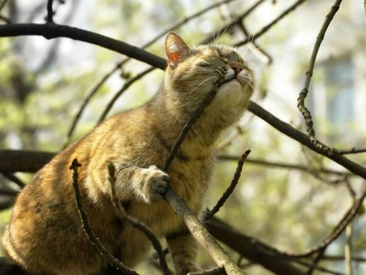 Кот на дереве рисунок