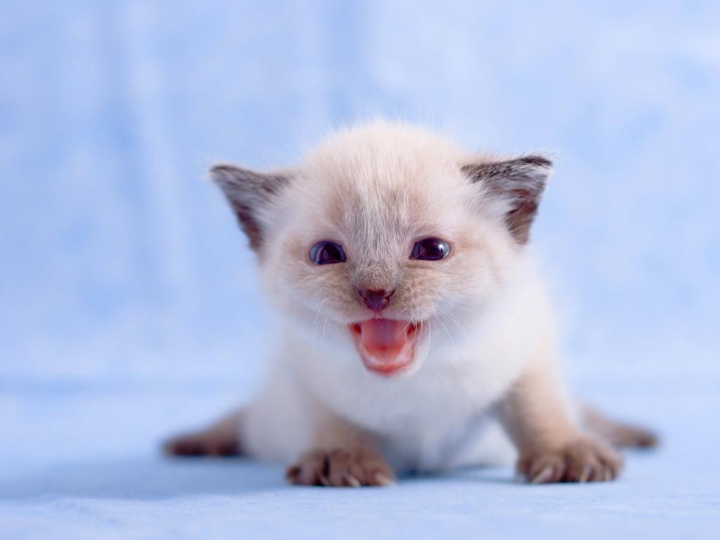 Скачать милые картинки котят бесплатно