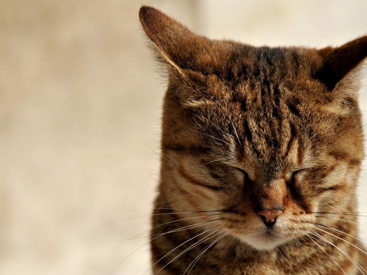 Очень грустный котик