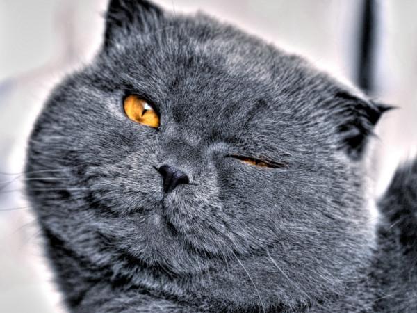 Подмигивающий кот фото