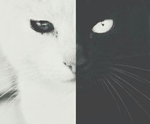 Необычная черно-белая кошка