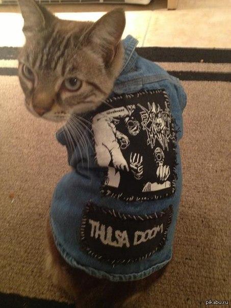 Кот металлист