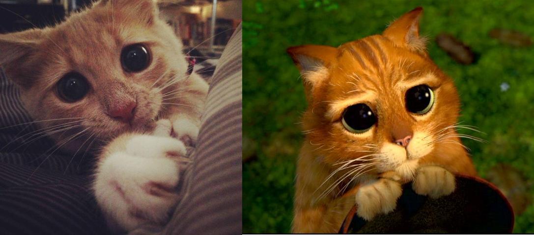 Картинки по запросу Коты похожие на киногероев