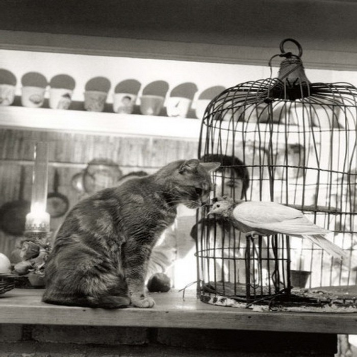 Робер Дуано и его фото кота