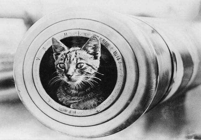 Непотопляемый Сэм — самый известный кот