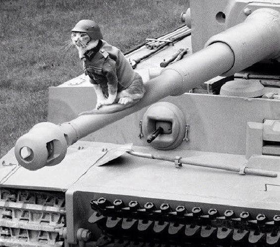 Кот на войне