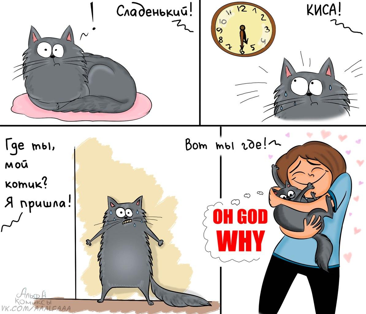 Котик, ты где. Альфа Комиксы