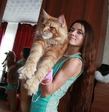 Большие кошки мейн кун