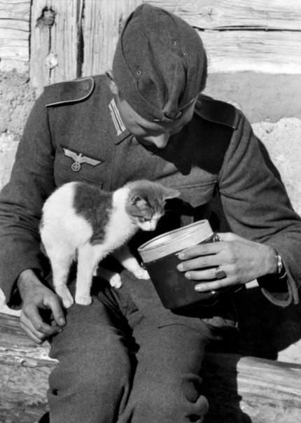 Животные в годы войны