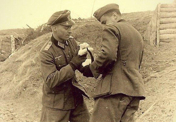 Коты Второй мировой войны