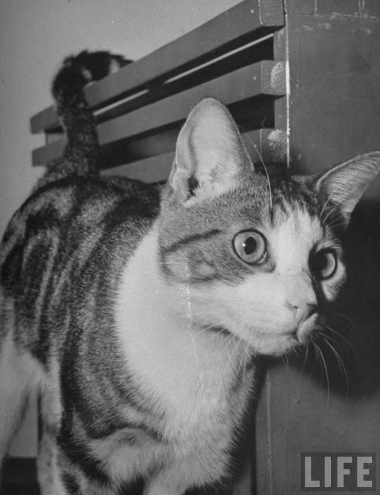 Тестирование реакций котов