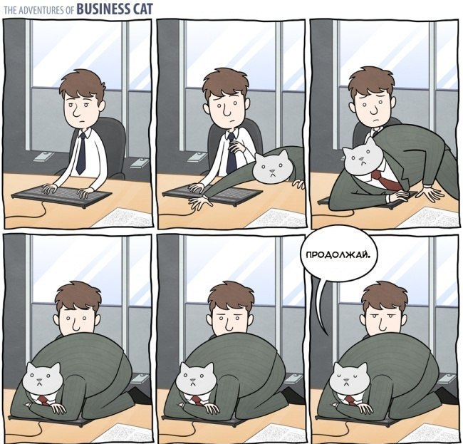 Приключения бизнес кота — business cat
