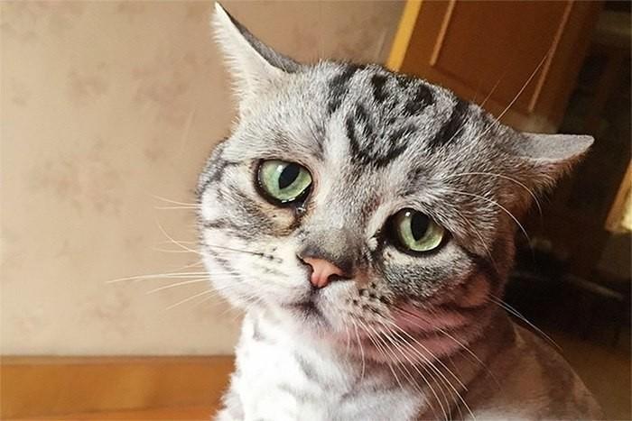 Очень грустный кот