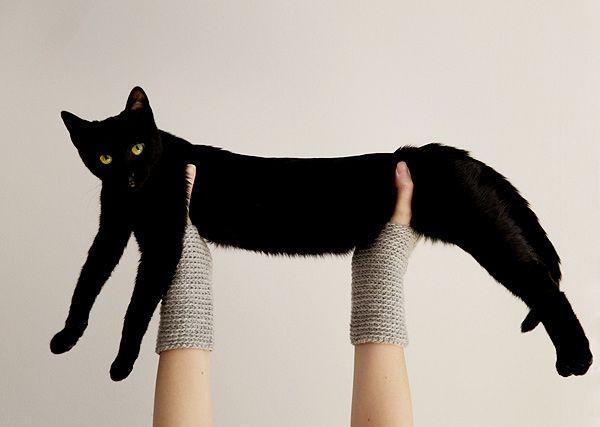 Черный кот с желтыми глазами, которые тебя покорят