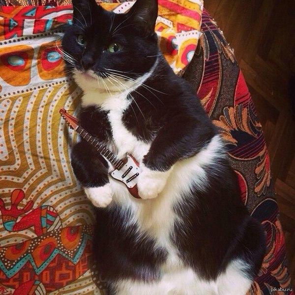 Кот близнец Адольфия