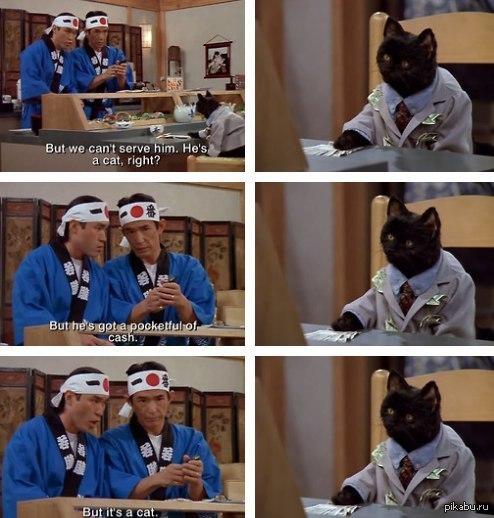 Про медицину и кота