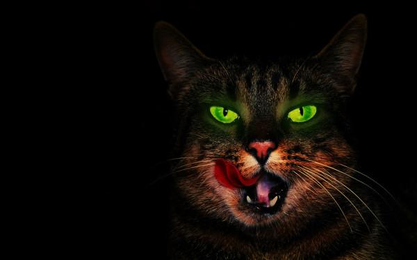 Невероятные кошачьи глаза