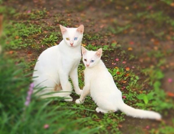 20 кошек и их котят