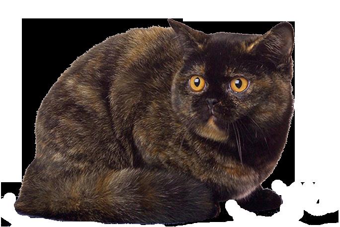 http://foto-cat.ru/wp-content/uploads/2015/08/CHerepahovyiy-okras