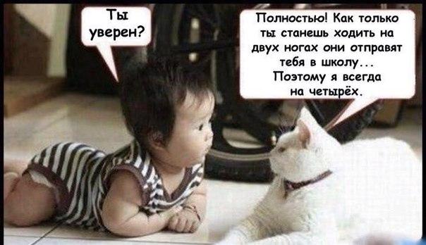 Кошки и дети фото смешные