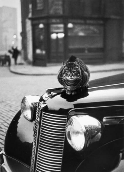 Привычки котов не меняются. Лондон, 1950-е.