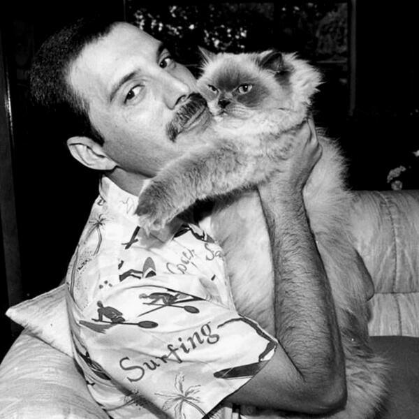 Фредди Меркьюри с своим персидским котом