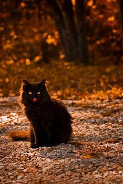 Черный кот с язычком осенняя подборка