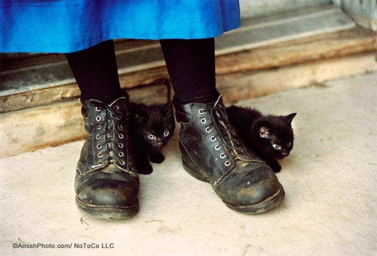 Два маленьких черных котят