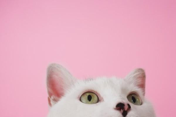 Кот на розовом фоне