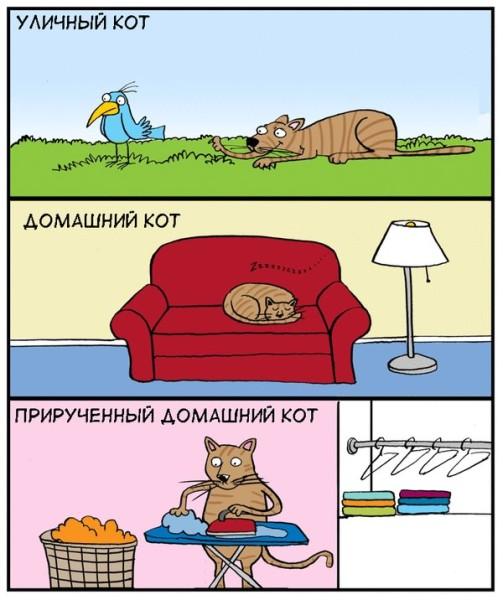 Чем отличается уличный кот от домашнего (комикс)