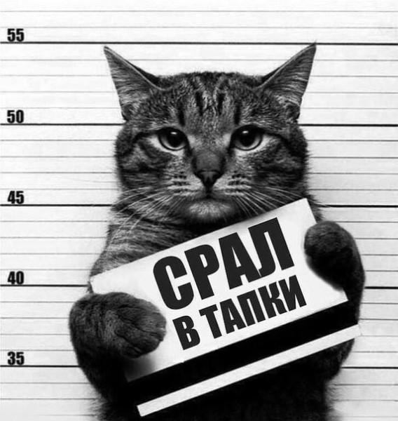 Картинка кота срал в тапки :)