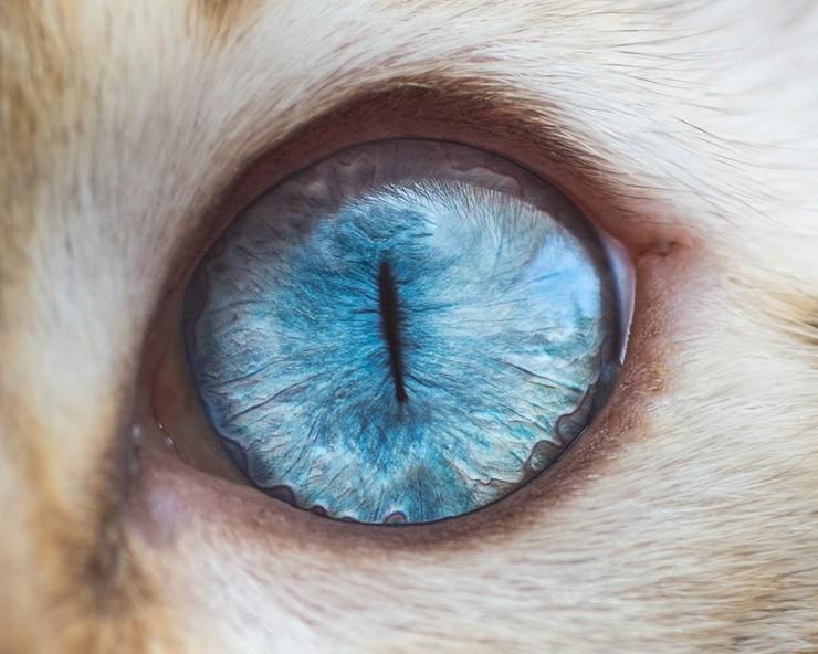 Глаза кошек фотограф Эндрю Марттила