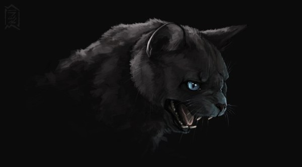 Очень злая черная кошка