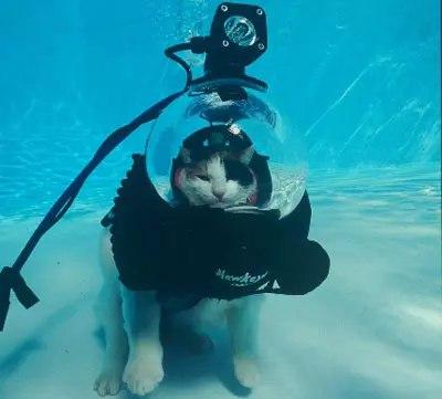 Кот в акваланге или кот водолаз