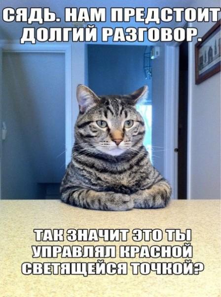 Приколы с котами — смешные надписи