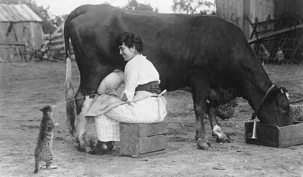 Корова, доярка и кот, США, 1921 год.