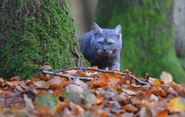 Серая кошка возле дерева