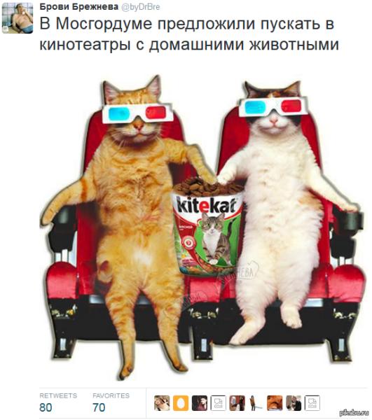 Мосгордума может разрешить брать в кино животных