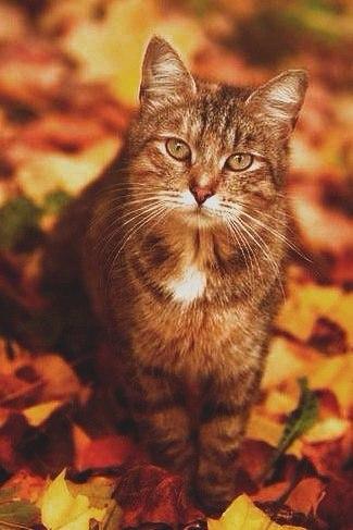 Коты и осень