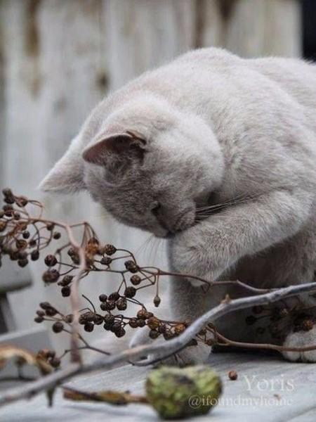 Осенняя подборка картинок с серым котом