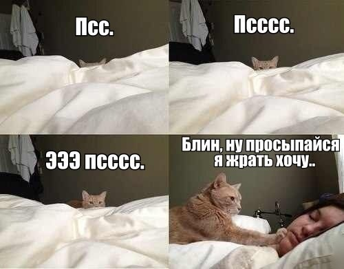Кот будит хозяйку фото