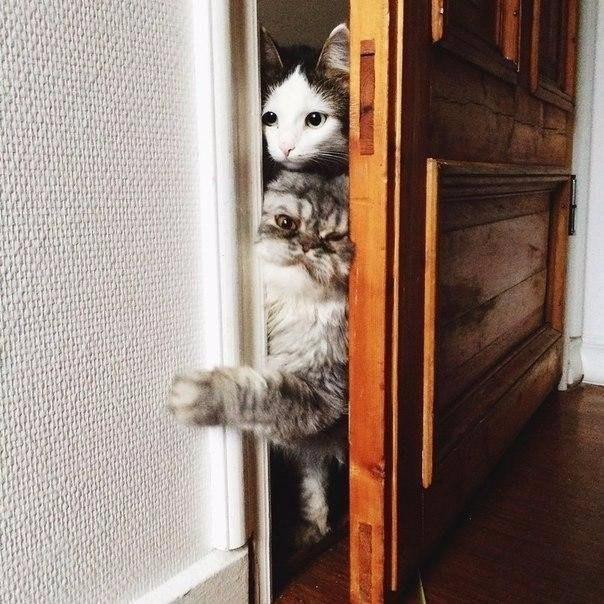 Котики пытаются войти в дверь, когда ты им запрещаешь