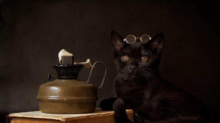Черный кот в очках