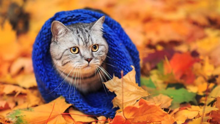 Серый кот в шарфике