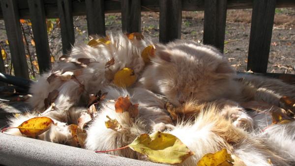 Пушистый кот спит в листве