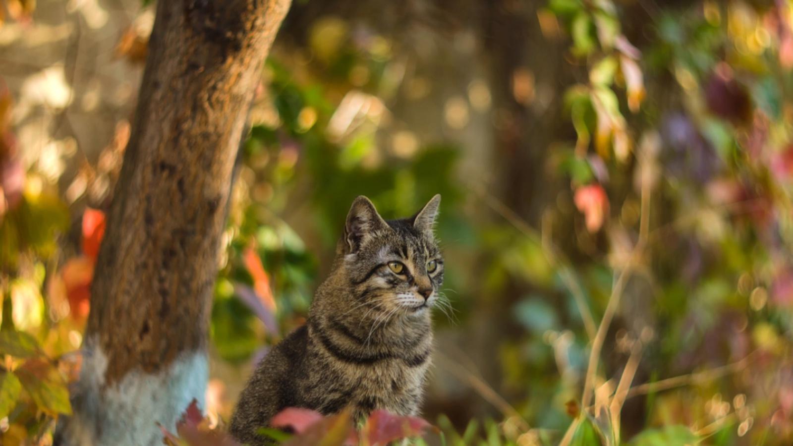 Дворовый кот в листве