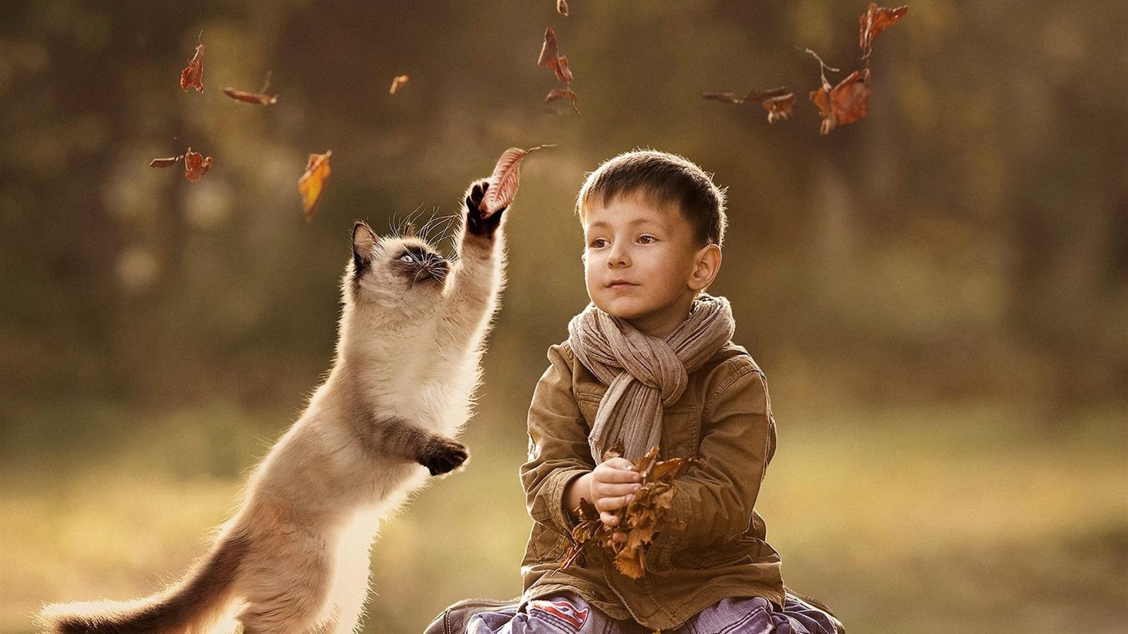 Пушистый сиамский котенок ловит листочек